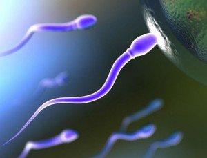 Возможно ли зачатие сразу после менструации