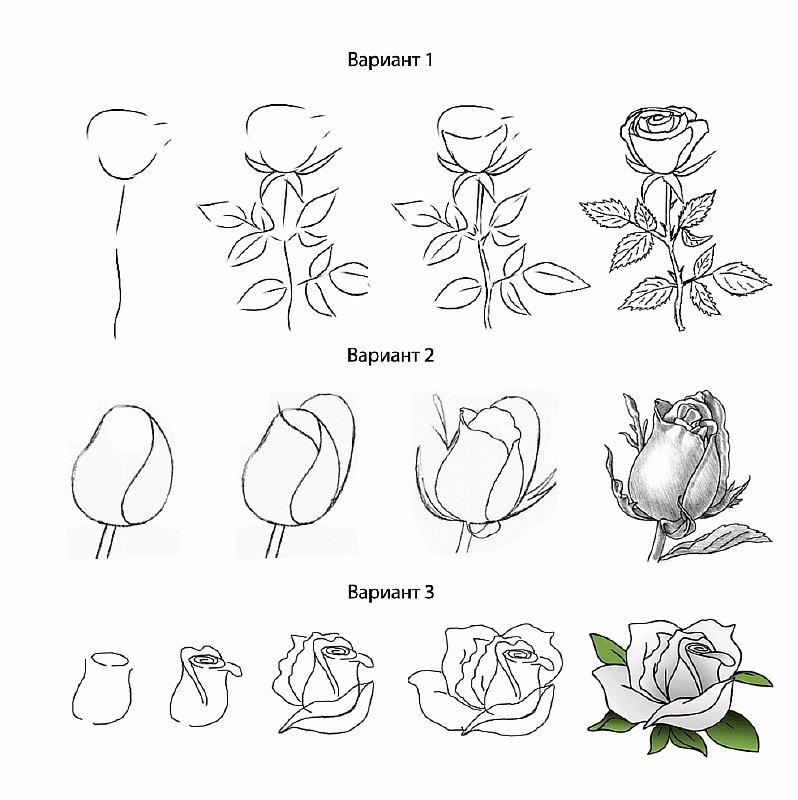 Розы рисуем поэтапно