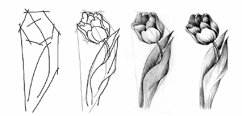 легкие цветы карандашом картинки