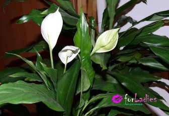 Цветы женское счастье фото
